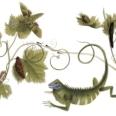 Google o sarbatoreste pe naturalista Maria Sibylla Merian